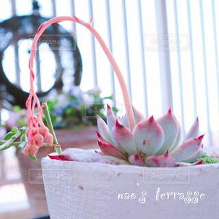 花,花瓶,バラ,薔薇,観葉植物,多肉植物,桃太郎,多肉植物の花