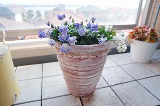 花,屋内,花瓶,窓,紫の花,床,植木鉢,観葉植物,草木