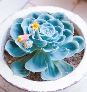 花,ケーキ,花瓶,バラ,薔薇,皿,多肉植物,菓子,七福神