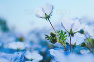 空,花,花束,水色,ネモフィラ,草木,ブルーの世界,ブルーの花
