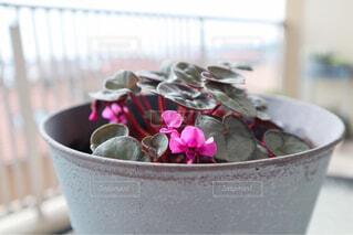 花,花瓶,テーブル,ピンクの花,植木鉢,カップ,観葉植物,草木,原種シクラメン