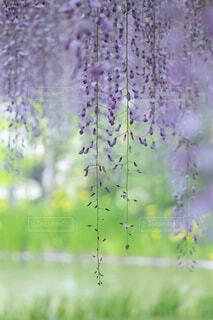 花,春,緑,ラベンダー,藤,新緑,旅行,たくさん,草木,ライン