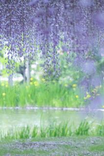 自然,花,春,屋外,緑,ラベンダー,草,新緑,旅行,草木