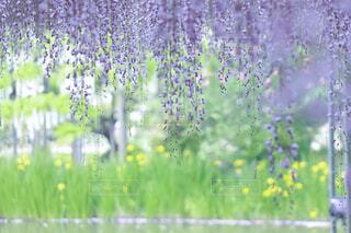 花,春,屋外,緑,ラベンダー,草,藤,新緑,旅行,草木