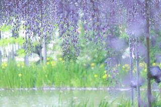 花のクローズアップの写真・画像素材[4497715]