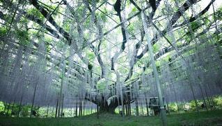 春,森林,屋外,緑,草,藤,樹木,新緑,旅行,たくさん,ジャングル,草木,日中