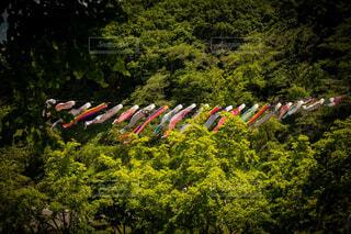 森の中で凧を飛ばす人々のグループの写真・画像素材[4497717]