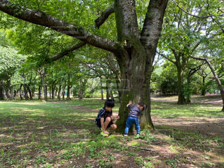 木の隣に立っている人の写真・画像素材[4587118]