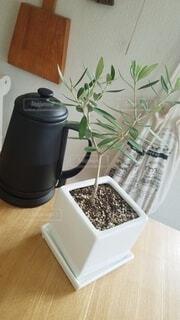 インテリア,コーヒー,屋内,植木鉢,観葉植物,オリーブ,ナチュラル,ダイニングテーブル,草木,ほっと一息