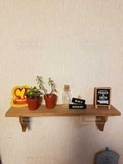 インテリア,屋内,壁,ツール,多肉植物,テキスト