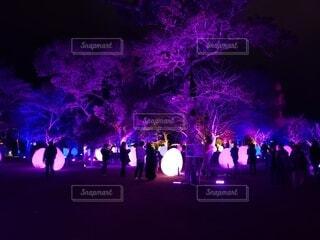 夜,夜景,幻想的,暗い,パープル,樹木,イルミネーション,クリスマス,照明,明るい