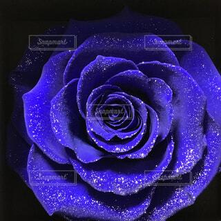 花,青,紫,バラ,薔薇,奇跡,草木,花言葉,プリザーブドフラワー