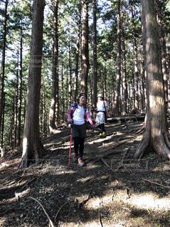 風景,森林,木,屋外,樹木,人物,人,ハイキング,草木,登山道,登山女子