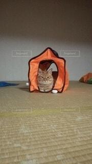 猫,屋内,オレンジ,家,寝転ぶ,床,子猫,壁