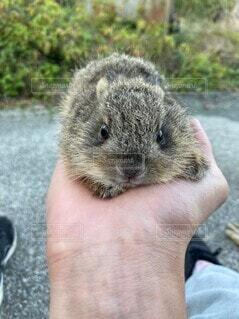 動物,屋外,手,人物,人,手乗り,地面,マウス,ウサギ,野うさぎ,子うさぎ