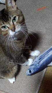 猫,動物,屋内,床,子猫,ネコ科