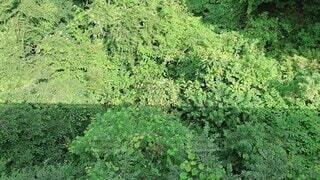 屋外,緑,草,樹木,サイクリング,草木
