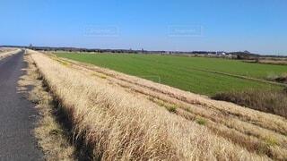 空,屋外,景色,草,農業,作物,草木