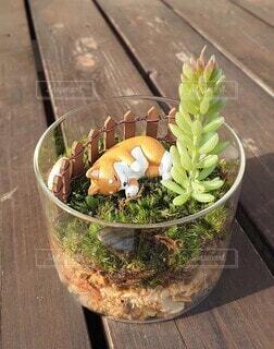 屋外,植木鉢,地面,観葉植物,木目,ガーデン