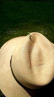 自然,帽子,麦わら,草,麦わら帽子,虫,カマキリ,頭飾り