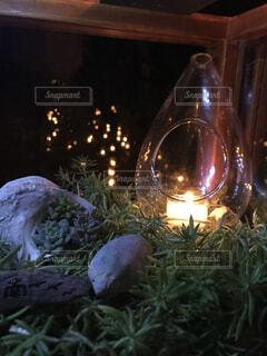 夜,ランタン,キャンドル,クリスマス,明るい,思い出,多肉植物,草木,キャンドルナイト