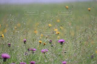 自然,花,花畑,雨,緑,景色,水玉,雨上がり,梅雨,小雨,草木,小花,ワイルドフラワー,広葉