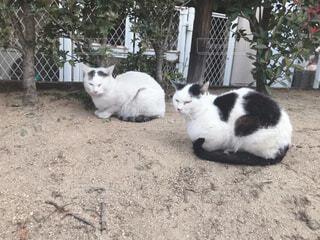猫,動物,屋外,白,黒,2匹,景色,樹木,地面