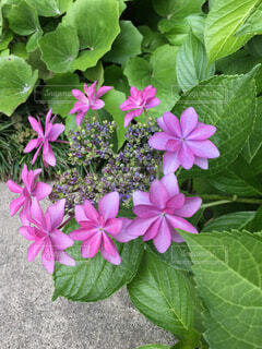我が家の花壇でダンスパーティーの写真・画像素材[4489901]
