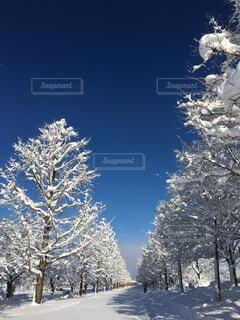 自然,風景,空,公園,冬,雪,屋外,白,青空,枝,林,日光,景色,影,樹木,朝,明るい,散歩道,草木,吹雪