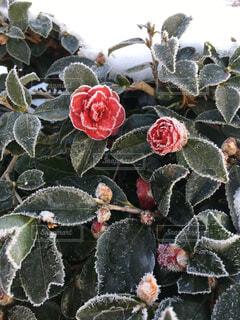 厳冬の朝の写真・画像素材[4512080]