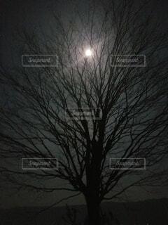 自然,夜,樹木,月