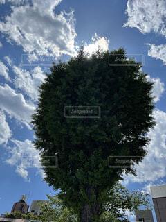 自然,空,屋外,雲,樹木,草木