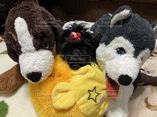 犬,動物,ペット,ぬいぐるみ,おもちゃ,ミニチュアシュナウザー,テディベア,IKEA,わんちゃん,シュナ,イケア,グッズ,ワンちゃん,黒シュナ