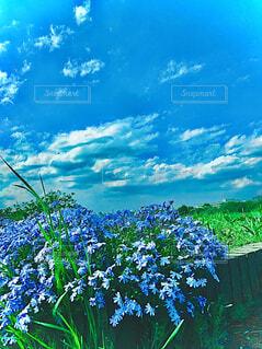 自然,空,花,屋外,青い空
