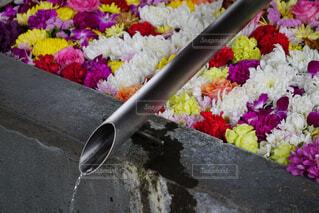 花,カラフル,水,バラ,カーネーション,菊,花手水
