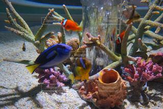 魚,水族館,水面,水中,カクレクマノミ,珊瑚礁,ナンヨウハギ,サンゴ礁の魚