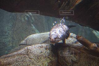 動物,かわいい,水族館,水中,元気,カワウソ