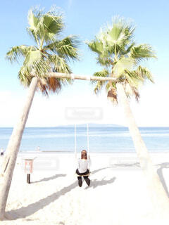 夏と言えば…海&ヤシの木🌴癒しをもとめにの写真・画像素材[4507587]