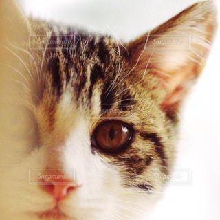 猫の写真・画像素材[202935]