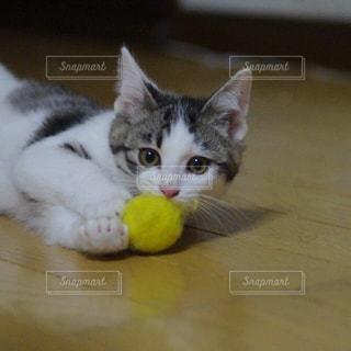 猫の写真・画像素材[205282]