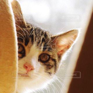 猫の写真・画像素材[210524]