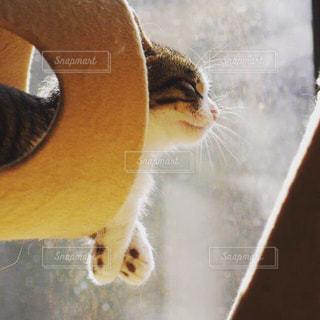 猫の写真・画像素材[210577]