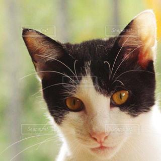 猫の写真・画像素材[211428]