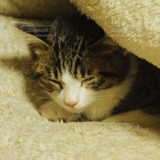 猫の写真・画像素材[239127]