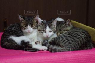 猫 - No.241745