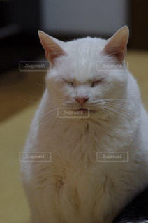 猫の写真・画像素材[242940]