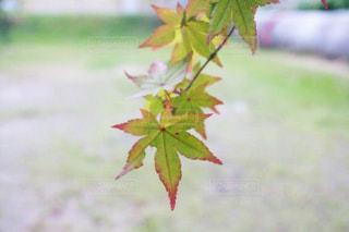 秋の写真・画像素材[244736]