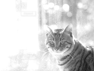 カメラを見ている猫 - No.849178