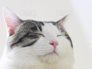 近くに猫のアップの写真・画像素材[991234]
