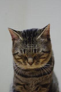 カメラを見ている猫 - No.991236
